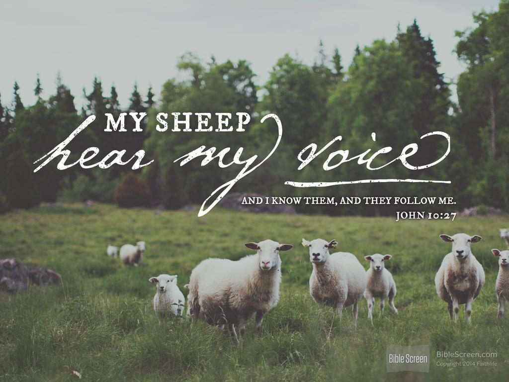 Jesus, our Shepherd | Sanford church of Christ